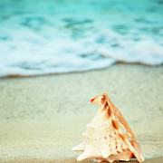 Miami Heat Prints - Seashell Print by MotHaiBaPhoto Prints