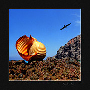 Seashell Fine Art Posters - Seashell on the rocks Poster by Manolis Tsantakis