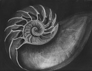 Seashell Drawings Metal Prints - Seashell Metal Print by Tina Boyer