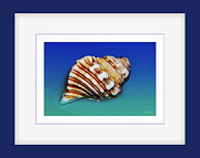 Sea Shell Art Prints - Seashell Wall Art 1 - Blue Frame Print by Kaye Menner