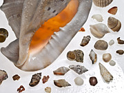 Seashell Fine Art Posters - Seashells and Water 01 Poster by Juan Angel De Corral