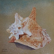 Vicki Greene - Seashells by the Seashore