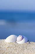 Seashell Photo Framed Prints - Seashells on the beach Framed Print by MotHaiBaPhoto Prints