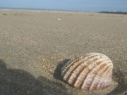 Deauville Photos - Seashells on the Seashore by Menucha Citron