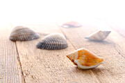 Scattered Prints - Seashells on Wood Dock Print by Olivier Le Queinec