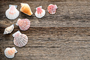 Weathered Wood Framed Prints - Seashells on Wood Framed Print by Olivier Le Queinec
