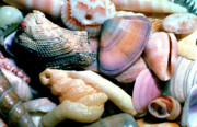 Puerto Rico Posters - Seashells Puerto Rico Poster by Thomas R Fletcher