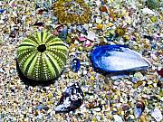 Sea Shells Photos - Seashore colors by Douglas Barnett