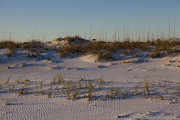 Grayton Beach Posters - Seaside Dunes 4 Poster by Charles Warren