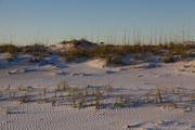 Seaside Dunes 4 Print by Charles Warren