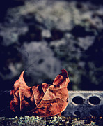 Autumn Leaf Prints - Season Of Fire Print by Odd Jeppesen