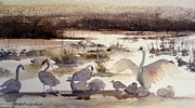 Swans... Paintings - Seasons Change by Sandra Strohschein