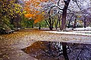 Puddle Acrylic Prints - Seasons Changing Acrylic Print by Sven Brogren