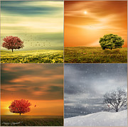 Four Trees Framed Prints - Seasons Delight Framed Print by Lourry Legarde