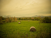 Pastureland Prints - Seasons End. Golden Hay Rolls in a Farmers Field Print by Chantal PhotoPix