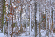 Photography Greeting Cards Posters Prints - Seasons First Snow Print by Gerlinde Keating - Keating Associates Inc