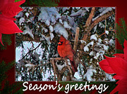 Andrea Everhard Prints - Seasons Greetings Print by Andrea Everhard