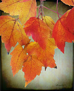 Lacy Abstract Prints - Seasons leaves Print by Anne Lacy