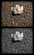 Lots Of Leaves Framed Prints - Seasons of Change Framed Print by Luke Moore