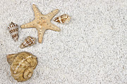 Aquatic Photo Prints - Seastar And Shells Print by Joana Kruse