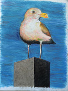 Seattle Pastels Framed Prints - Seattle Sea Gull Framed Print by Ken Martin