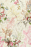 Pink Flower Branch Paintings - Seaweed design for silk material by William Kilburn