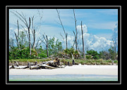 Sandy Shore Framed Prints - Secluded Beach Framed Print by Carolyn Marshall