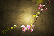 Floral Photographs Prints - Secret Garden Branch Print by Andrea Hazel Ihlefeld