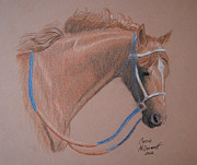 Head Shot Drawings - Secretariat by Corrie McDermott