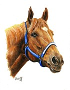 Secretariat Framed Prints - Secretariat Framed Print by Pat DeLong
