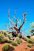 Bell Rock Vortex Framed Prints - Sedona twisted Juniper Tree Framed Print by Eva Kaufman