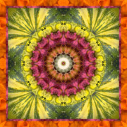 Sacred Geometry Posters - Seed Center Poster by Bell And Todd