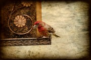 Birds - Seed For Me by Angie McKenzie