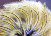 Abstract Flowers Photos - SeedHeads by Brian Roscorla