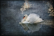 Swan Framed Prints - Seeing off the Day Framed Print by Eena Bo