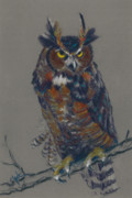 Great Pastels Prints - Seeking Owl  Print by Christine Kane