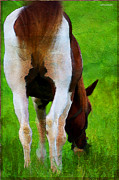 Grazing Horse Digital Art Posters - Self Portrait Poster by Ron Jones