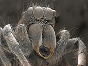 Jumping Spider Photos - Sem Of Spider by Power And Syred