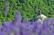 Abbaye Prints - Senanque Abbey and lavender field Print by Sami Sarkis