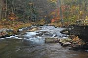 Pendleton County Framed Prints - Seneca Creek Autumn Framed Print by Randy Bodkins