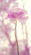 Botany Photo Prints - Sensual Print by Kristin Kreet