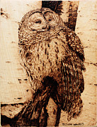 Owl Pyrography Metal Prints - Sentry Metal Print by Steven Hawkes
