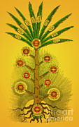 Kabbalah Posters - Sephirothic Tree Poster by Photo Researchers