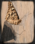 Lepidoptera Photos - Sepia Butterfly by Tony Ramos