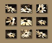 Sepia Daisy Flower Series Print by Sumit Mehndiratta
