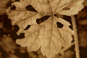 Decomposing Posters - Sepia Leaf Poster by Bonnie Bruno