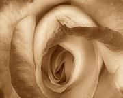 Sepia Petals Print by Cheryl Young