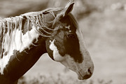 Young Horses Photos - Sepia Portrait  by Aidan Moran