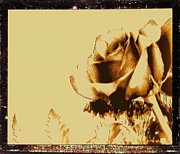 Antique Look Digital Art - Sepia Rose by Marsha Heiken