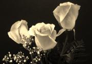 Black Background Paintings - Sepia Roses by Marsha Heiken